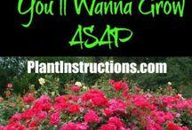 Grow, easy plants