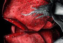 Rose Rosse❤