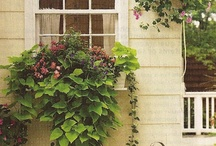 window boxes and urns