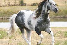 Horses/unicorns / Horses/unicorns