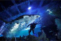 SHARK DIVING IN TURKUAZOO
