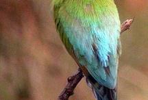 Birds - Victoria Australia