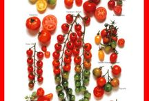 zöldség-gyümölcs/verdure, frutta