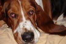 GOTTA LUV DOGS! / Dogs.. / by ~ gardenfairy ~