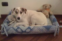 Dog Beds / by Anita Hill