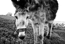 Donkeys and other animals for the farm / So,so many!
