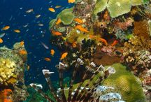 A coral reef / It's very pretty to look at