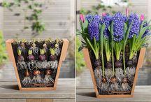 Inspiratie voor Buiten! / bloemen, zon, vogels, groen enz.