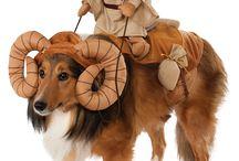 isi's costume