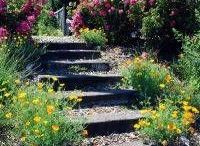 ⤴⤴ LETS STEP UP ⤴⤴ / ~~ Enjoy these beautiful steps leading to somewhere ! ~ PLEASE, PIN RESPECTFULLY !  Thank you for following... :) / by ~MARIE-LOU~