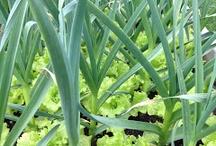 Lettuce Bytes