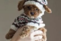Puppies I want ❤️
