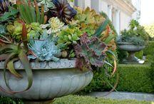 Rosmead Garden