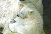 El amor mas grande de una mama