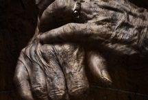 Hands /Mãos