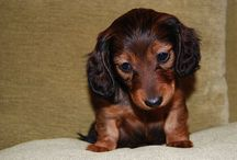 Zwierzęta / Mój pies Tino