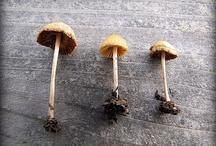 mushrooms / by Diane Reid