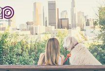 Dog-Friendly Destinations / Dog-Friendly Destinations for Travel Nurses