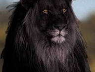 Unusual looking animal pics / by Crystal Laxton