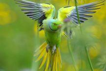 Pozorování ptáků