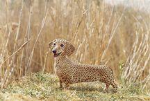Wienerdog
