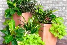 Plantinhas lindas
