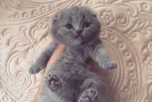 Foto super cute