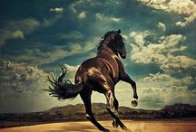 Cheval