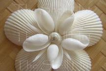 conchiglie/shells