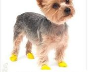 HRCO Products for Small Dogs