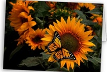 Sunflower Radiance Monarch Butterfly / by Butterflies Are Blooming