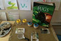 insects & bug project