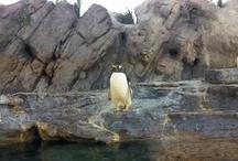 Penguins, Penguins, Penguins!!!!! <3
