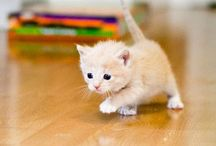 Cute kittens / They are adorable and a little dangerous sometimes. They can be loyal to you just like dogs.