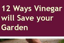 Vinegar in garden