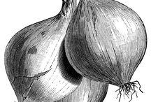 Vegetable engraving