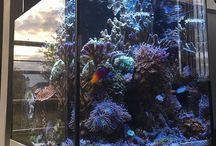 aqua marinhos
