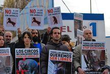 Noticiero Animal  / Noticias 24 HORAS del Mundo Animal en: www.Nomasmaltratoanimal2.blogspot.com