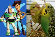 Woody & Buzz the Budgies / Budgies