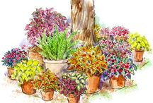 Garden Ideas & Tips / One of these days.... / by Joan Goins