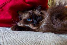 My pictures / Foto's over van alles. Katten, honden, landschap, vakantie etc.
