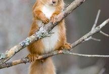 eekhoornen