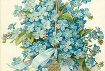 Forget-me-nots / Vintage postcards