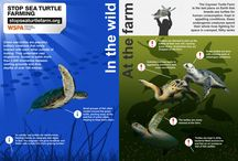 Marine Animals / by WSPA USA
