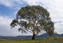 John trees