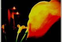 favorite flowers