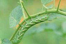 Pest Control Tips
