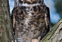 OWL•^•