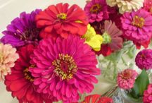 flowers : annuals / by Theresa Turner