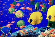 Fishes - Beautiful Creatures in the World! / Fishes and Fins !!